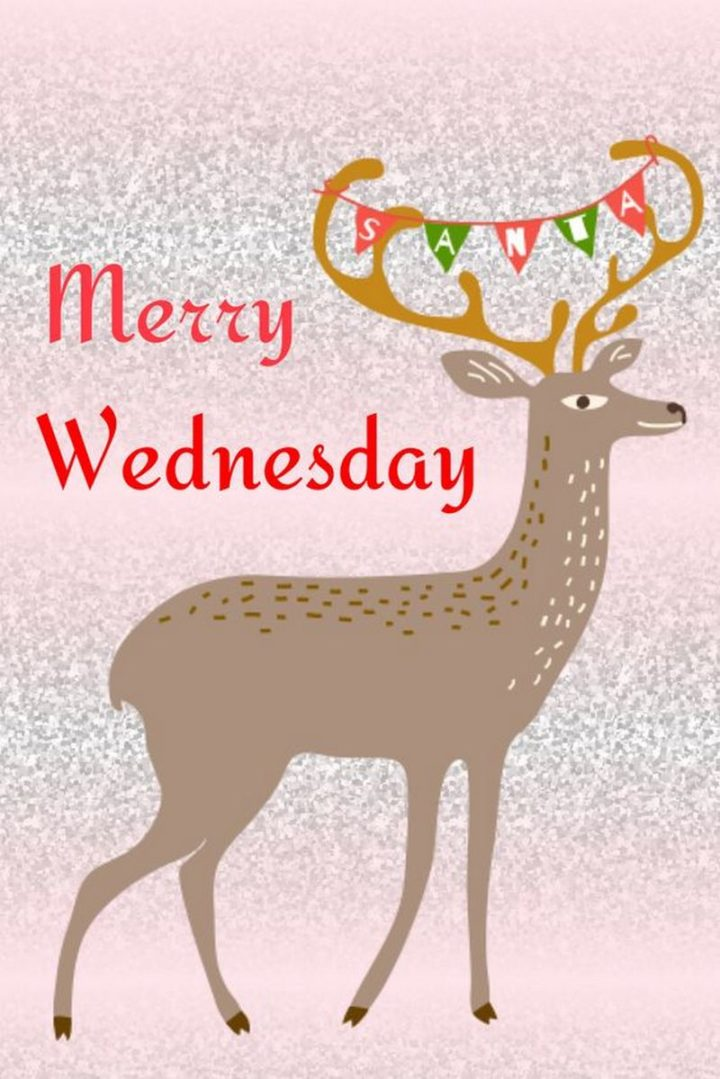 "65 Happy Wednesday Quotes - ""Merry Wednesday."" - Unknown"