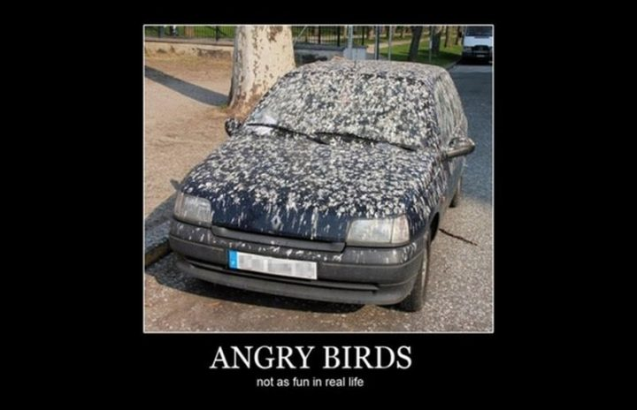 """85 Funny Car Memes - """"Angry Birds: Not as much fun in real life."""""""