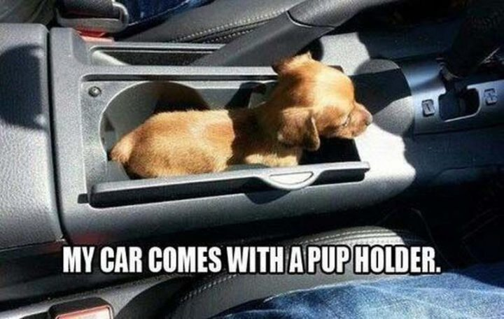 "85 Car Memes - ""My car comes with a pup holder."""