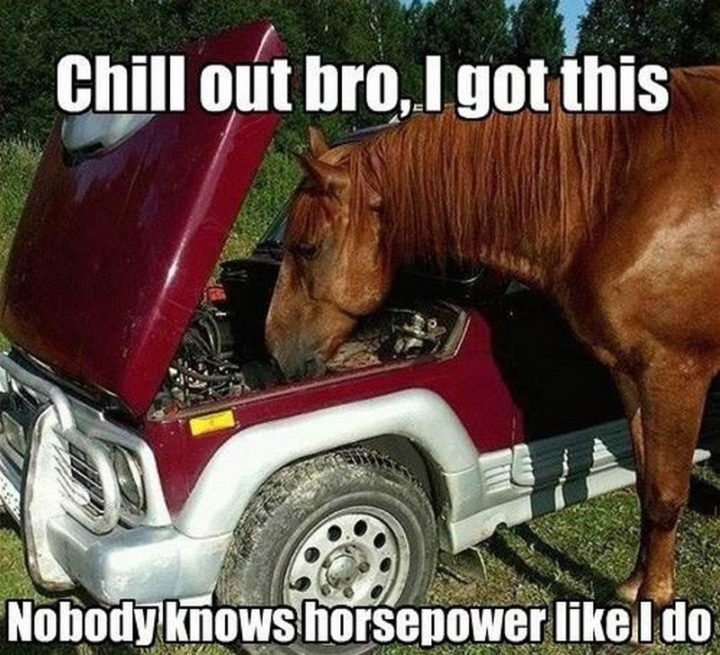 """""""Chill out bro, I got this. Nobody knows horsepower as I do."""""""