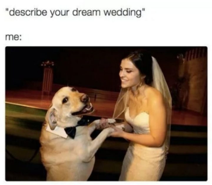"""65 Funny Dating Memes - """"Describe your dream wedding. Me:"""""""