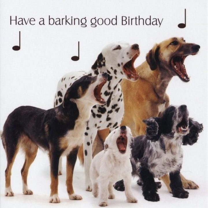 "101 Happy Birthday Dog Memes - ""Have a barking good birthday."""