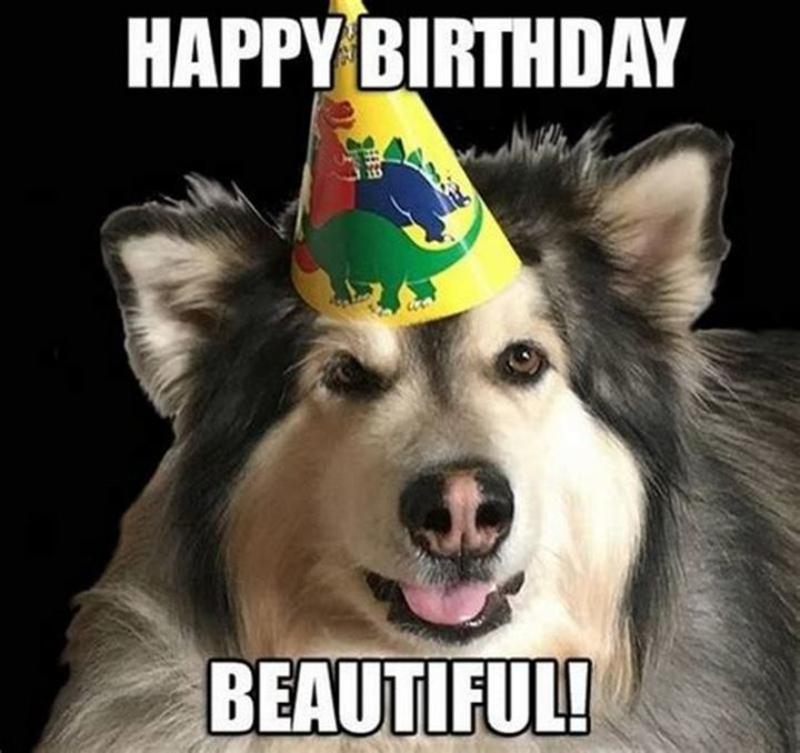 "101 Happy Birthday Dog Memes - ""Happy birthday beautiful!"""