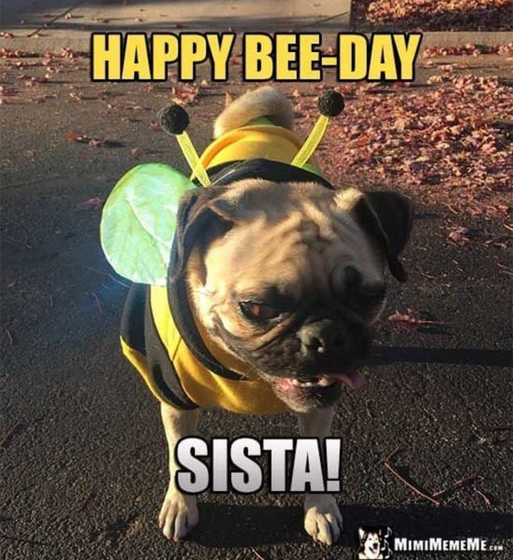 "101 Happy Birthday Dog Memes - ""Happy bee-day sista!"""