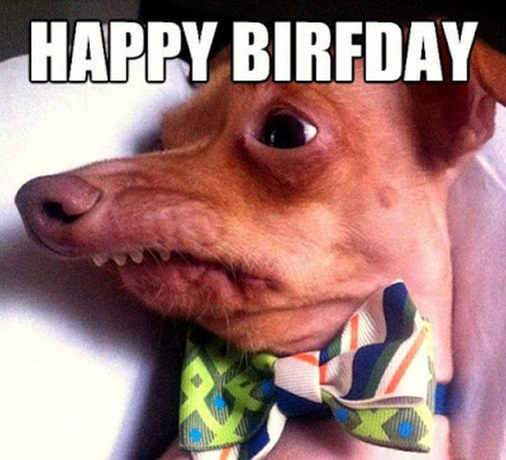 "101 Happy Birthday Dog Memes - ""Happy birfday."""
