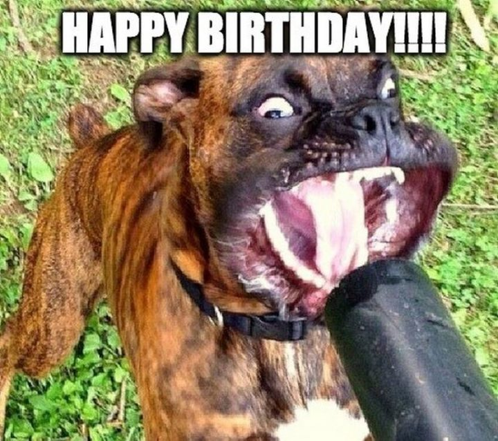 "101 Happy Birthday Dog Memes - ""Happy birthday!!!!"""