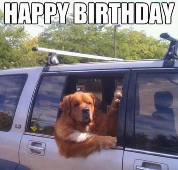 101 Happy Birthday Dog Memes - Happy birthday.""