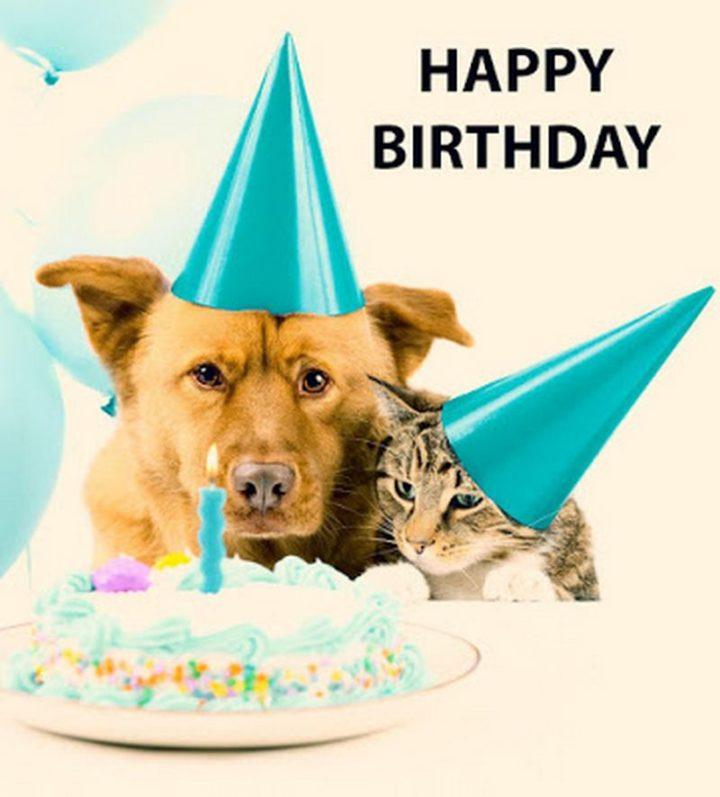 Happy Birthday Dog And Cat Meme