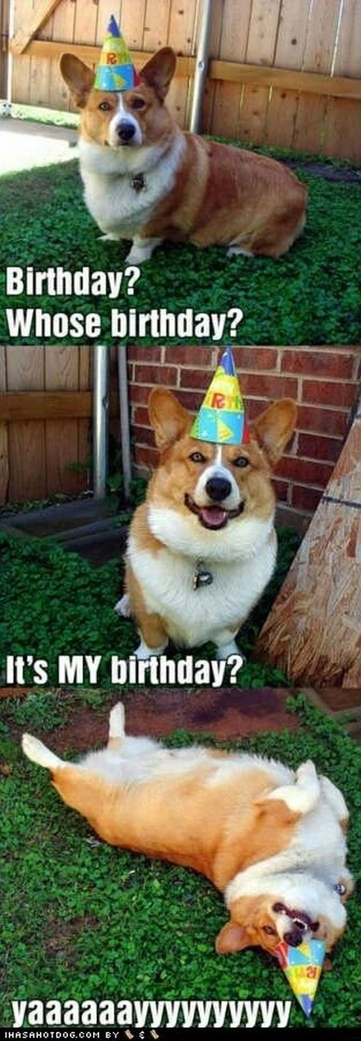 "101 Happy Birthday Dog Memes - ""Birthday? Whose birthday? It's MY birthday. Yaaaaaayyyyyyyyyy."""