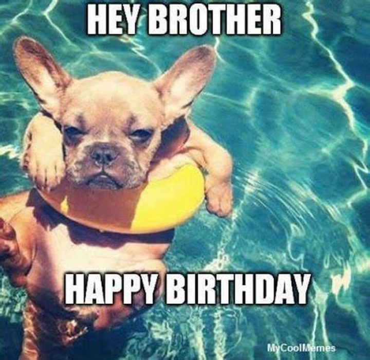 "101 Happy Birthday Dog Memes - ""Hey, brother. Happy birthday."""