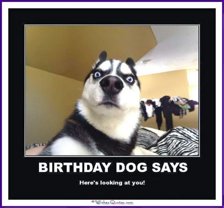 "101 Happy Birthday Dog Memes - ""Birthday dog says, Here's looking at you!"""