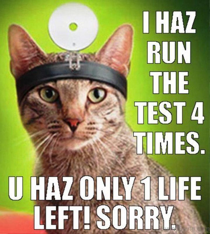 """I haz run the test 4 times. U haz only 1 life left! Sorry."""