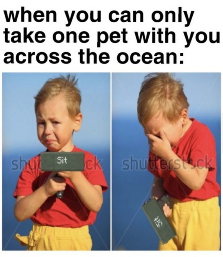 "85 Minecraft Memes - ""When you can only take one pet with you across the ocean:"""