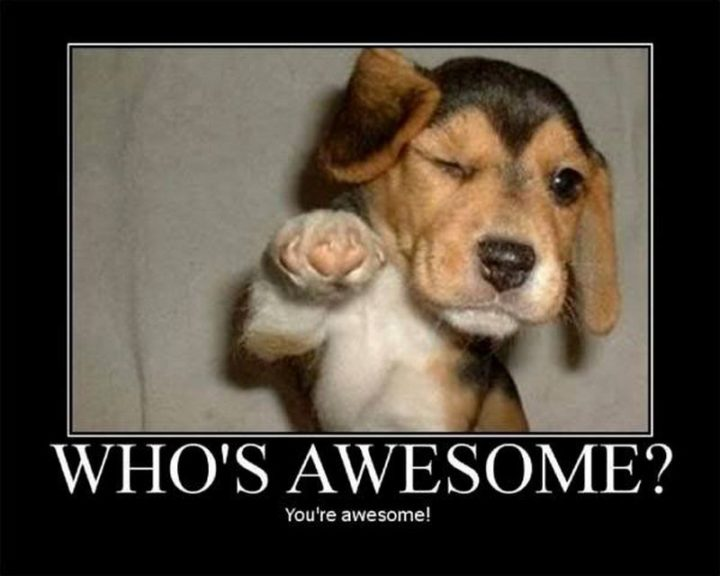 """67 Motivational Memes - """"Who's awesome? You're awesome!"""""""