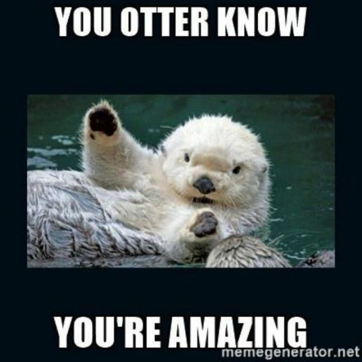 """67 Motivational Memes - """"You otter know you're amazing."""""""
