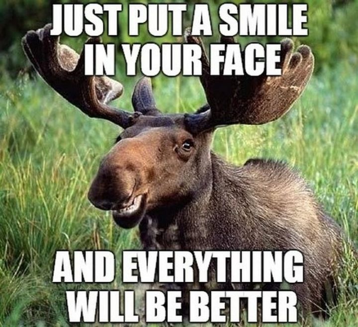 """67 Motivational Memes - """"Just put a smile in your face and everything will be better."""""""