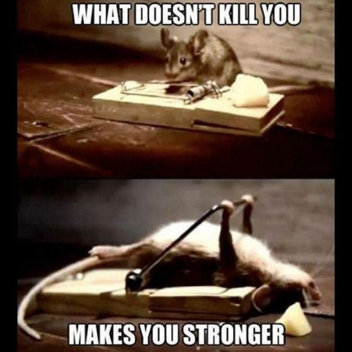 """67 Motivational Memes - """"What doesn't kill you makes you stronger."""""""