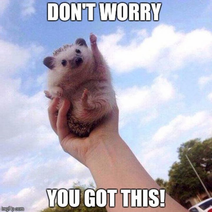 """67 Motivational Memes - """"Don't worry. You got this!"""""""
