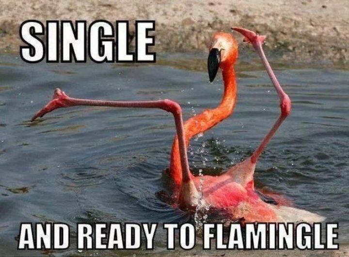 "67 Funny Single Memes - ""Single and ready to flamingle."""