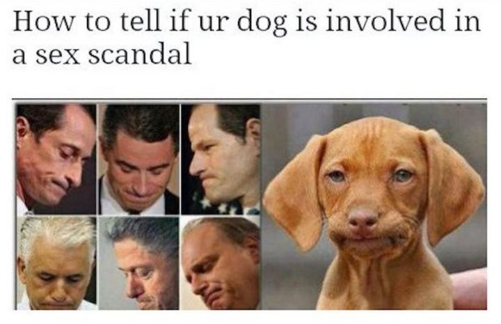 "71 Funny Dirty Memes - ""How to tell if ur dog is involved in a [censored] scandal."""