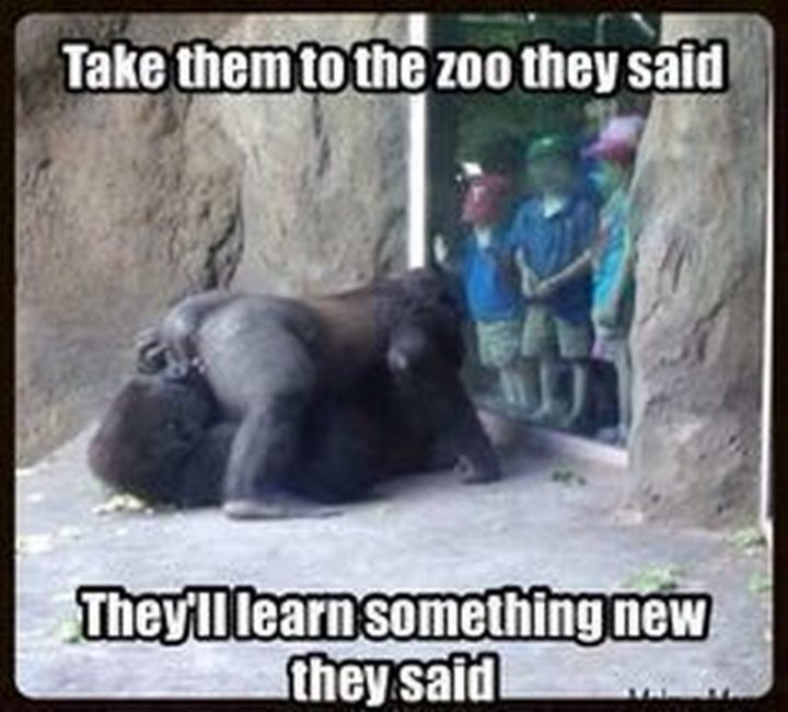 "71 Funny Dirty Memes - ""Take them to the zoo they said. They'll learn something new they said."""