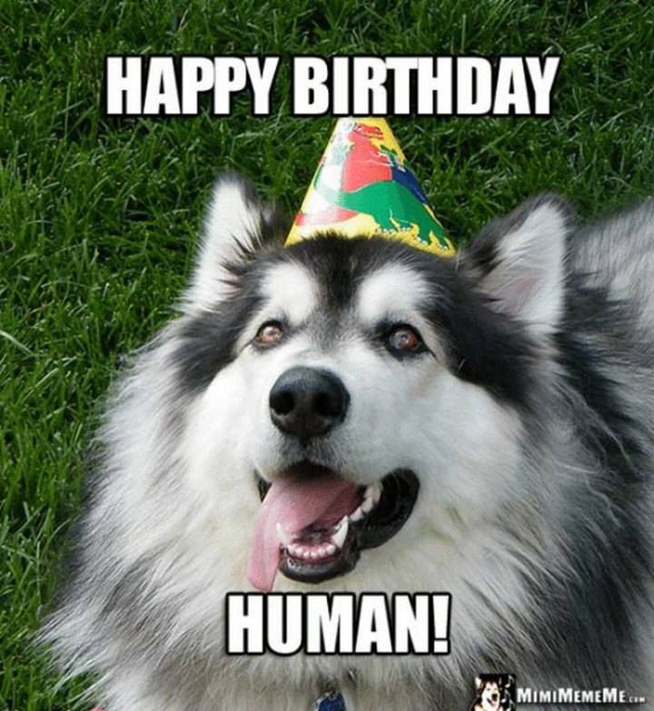 "101 Happy Birthday Dog Memes - ""Happy birthday human!"""