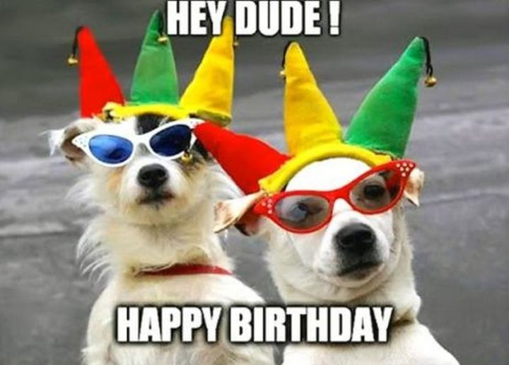 "101 Happy Birthday Dog Memes - ""Hey, dude! Happy birthday."""