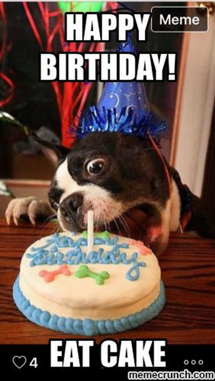 "101 Happy Birthday Dog Memes - ""Happy birthday! Eat cake."""
