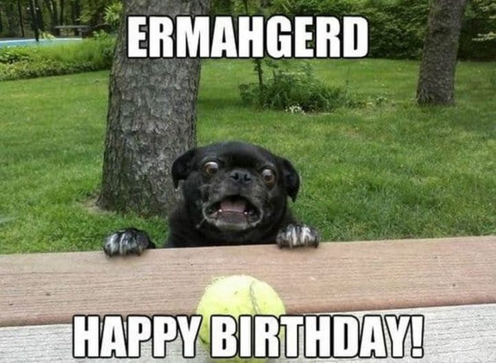 "101 Happy Birthday Dog Memes - ""Ermahgerd. Happy birthday!"""