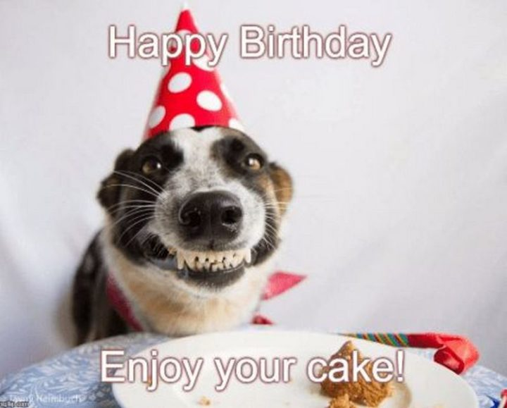 "101 Happy Birthday Dog Memes - ""Happy birthday. Enjoy your cake!"""