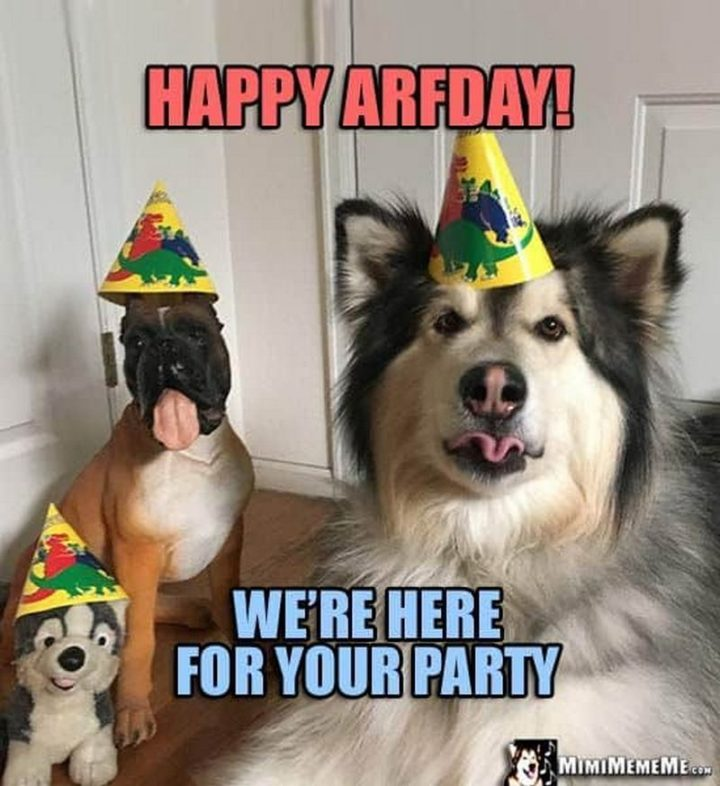 "101 Happy Birthday Dog Memes - ""Happy arfday! We're here for your party."""