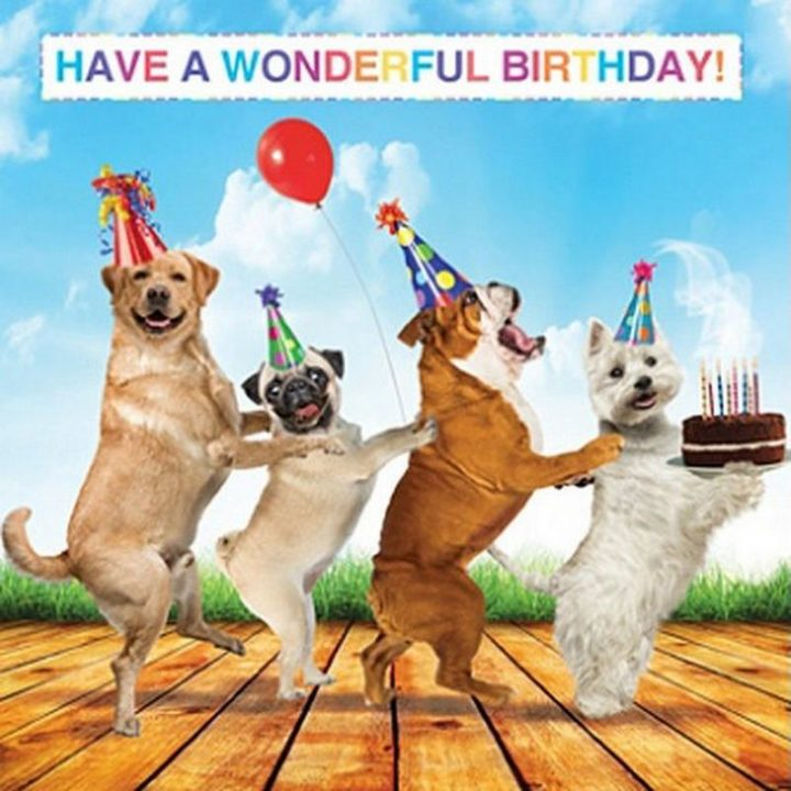 "101 Happy Birthday Dog Memes - ""Have a wonderful birthday!"""