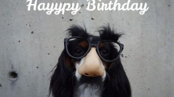 "101 Happy Birthday Dog Memes - ""Hayypy birthday."""