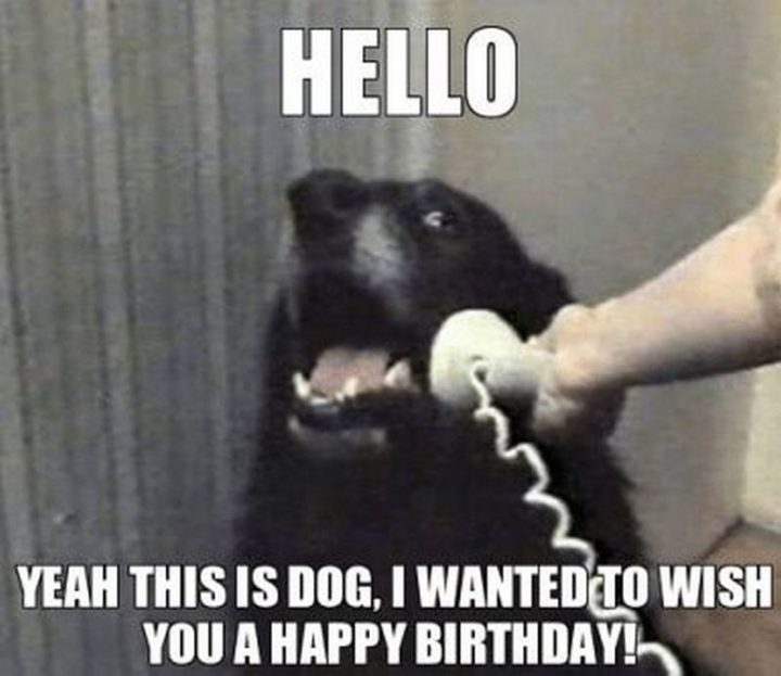 "101 Happy Birthday Dog Memes - ""Hello. Yeah, this is the dog. I wanted to wish you a happy birthday!"""