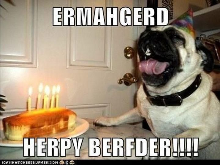 "101 Happy Birthday Dog Memes - ""Ermahgerd. Herpy berfder!!!!"""