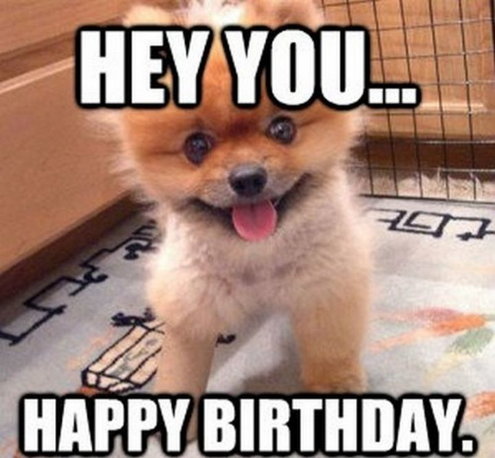 "101 Happy Birthday Dog Memes - ""Hey, you...Happy birthday."""