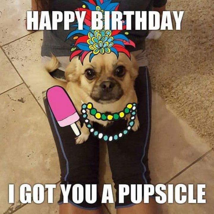 "101 Happy Birthday Dog Memes - ""Happy birthday. I got you a pupsicle."""