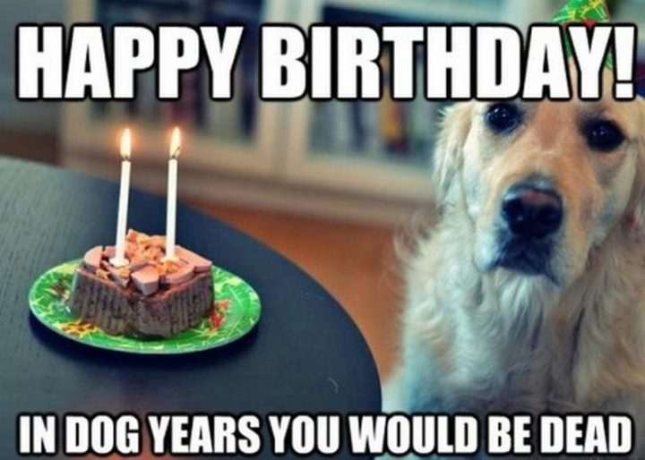 "101 Happy Birthday Dog Memes - ""Happy birthday! In dog years you would be dead."""