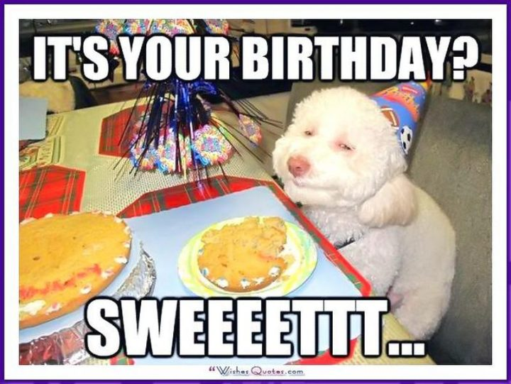 101 Happy Birthday Dog Memes - It's your birthday? Sweeeettt...""