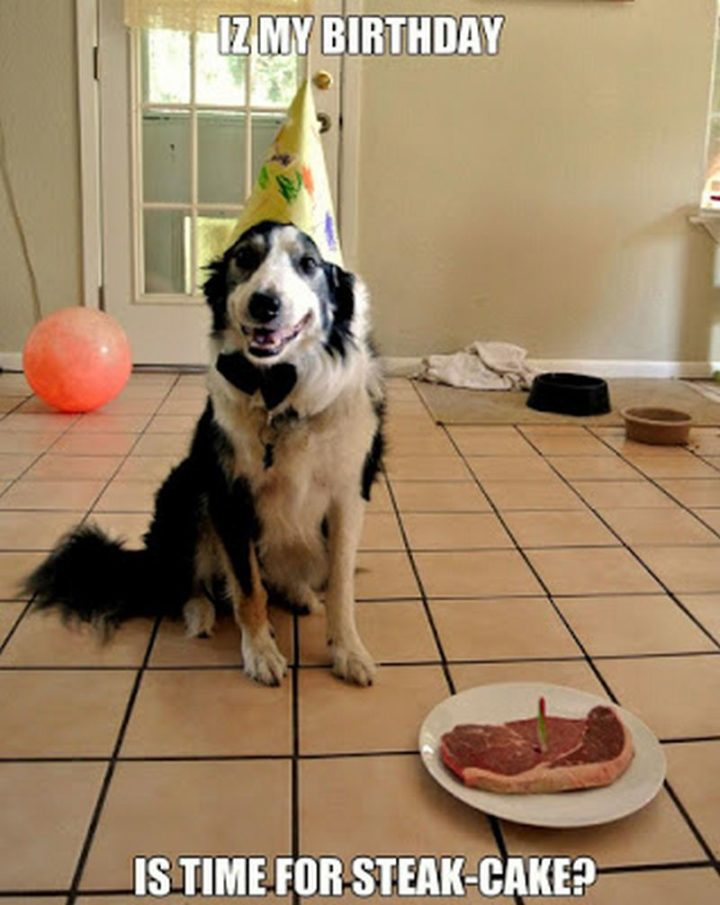 "101 Happy Birthday Dog Memes - ""Iz my birthday. Is time for steak-cake?"""