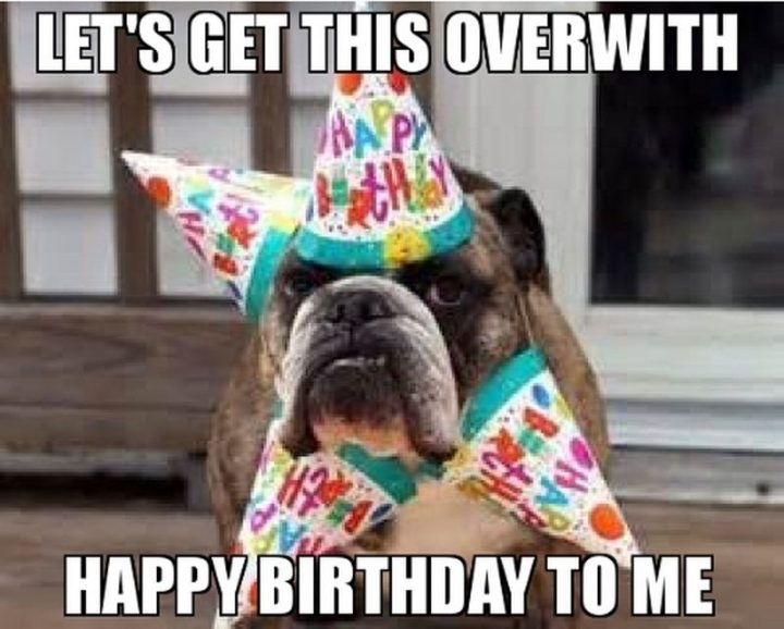 "101 Happy Birthday Dog Memes - ""Let's get this over with. Happy birthday to me."""