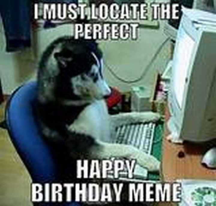 "101 Happy Birthday Dog Memes - ""I must locate the perfect happy birthday meme."""