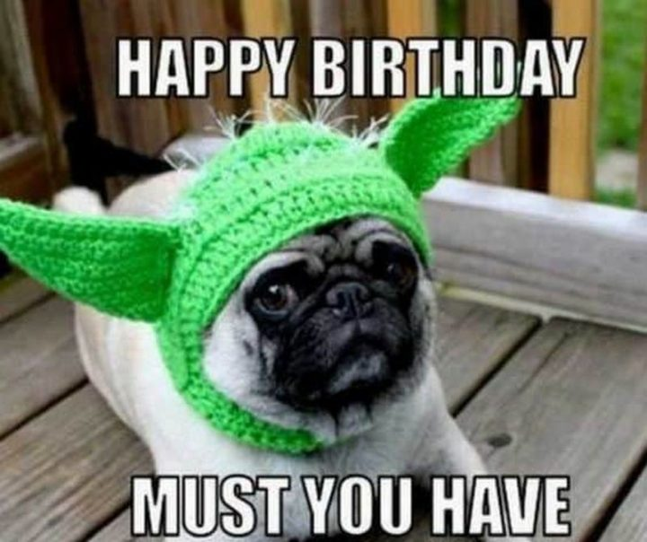 "101 Happy Birthday Dog Memes - ""Happy birthday must you have."""