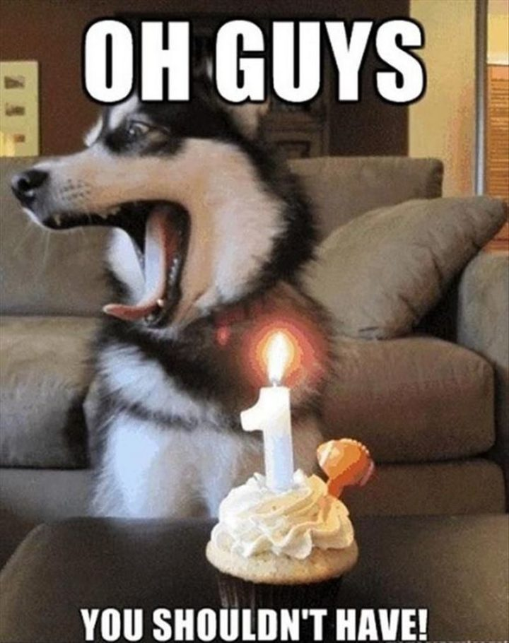 "101 Happy Birthday Dog Memes - ""Oh guys, you shouldn't have!"""