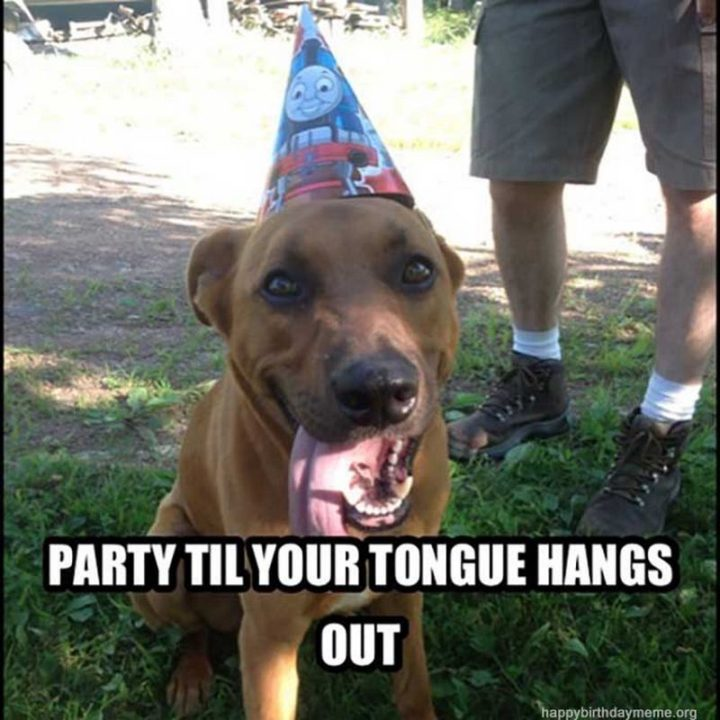 "101 Happy Birthday Dog Memes - ""Party til your tongue hangs out."""