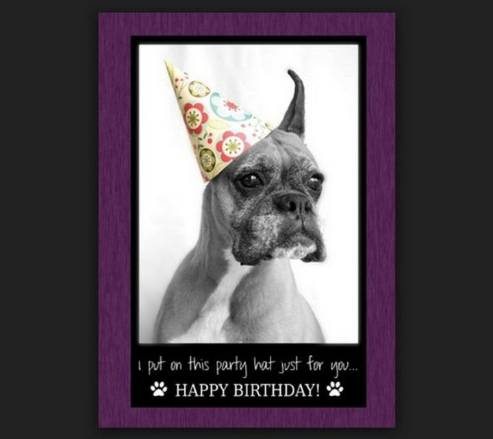 "101 Happy Birthday Dog Memes - ""I put on this party hat just for you...Happy birthday!"""