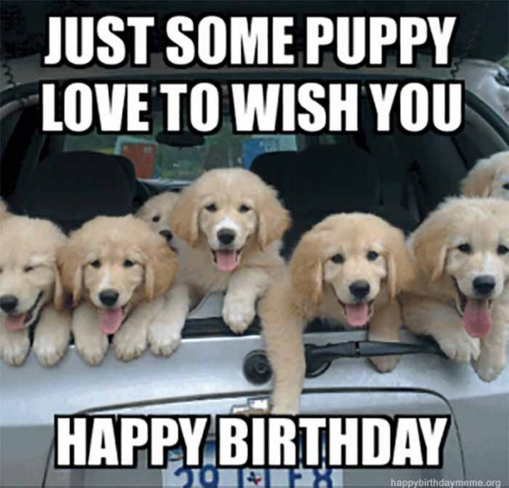 "101 Happy Birthday Dog Memes - ""Just some puppy love to wish you a happy birthday."""