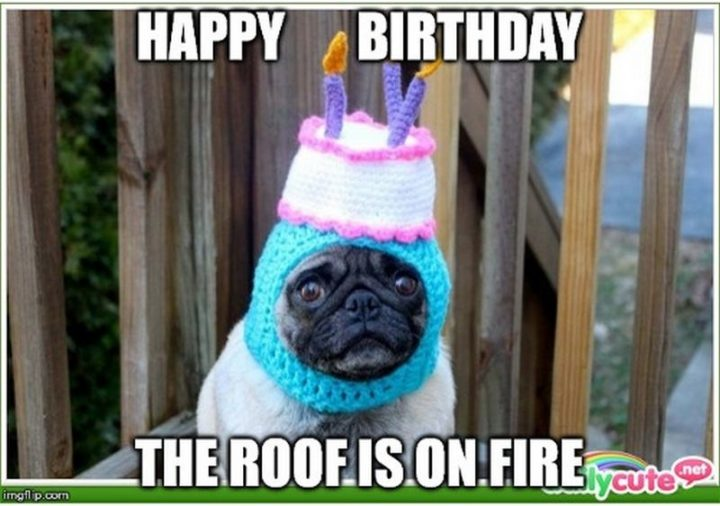 "101 Happy Birthday Dog Memes - ""Happy birthday. The roof is on fire."""