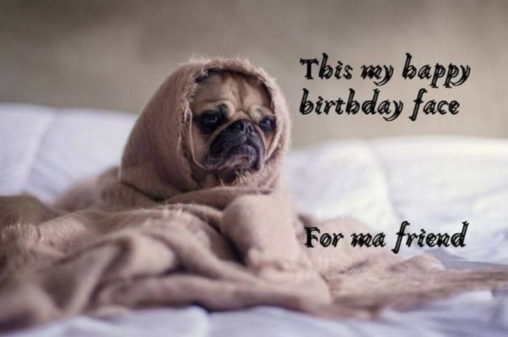 "101 Happy Birthday Dog Memes - ""This my happy birthday face for ma friend."""