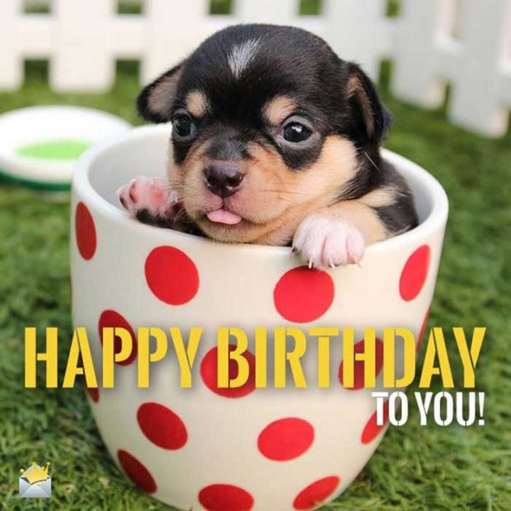 "101 Happy Birthday Dog Memes - ""Happy birthday to you!"""